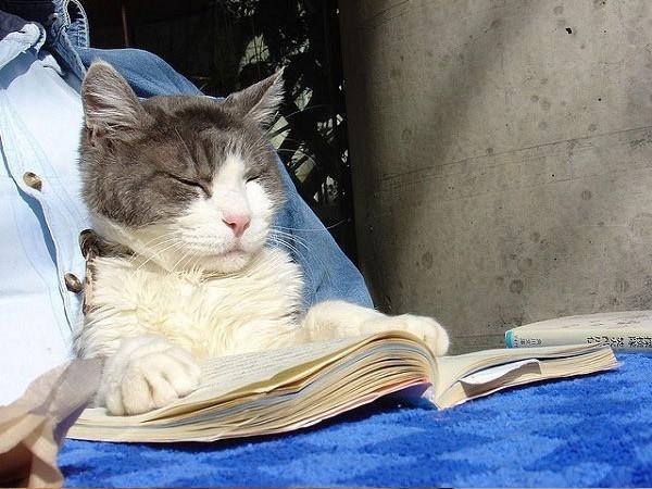 12 kiểu đọc sách của chó và mèo 510