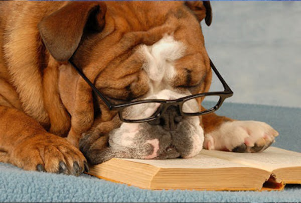 12 kiểu đọc sách của chó và mèo 610
