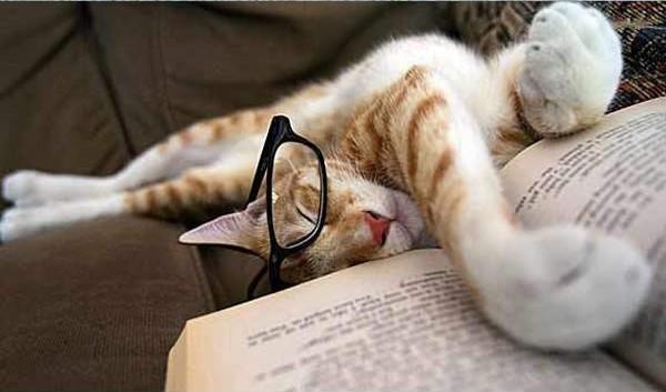 12 kiểu đọc sách của chó và mèo 710