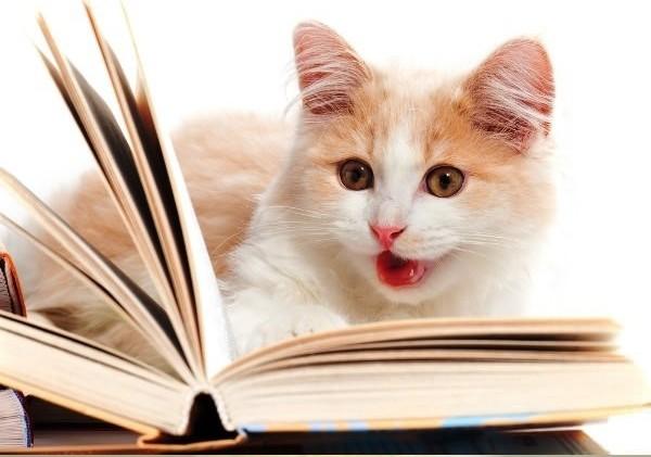 12 kiểu đọc sách của chó và mèo 810
