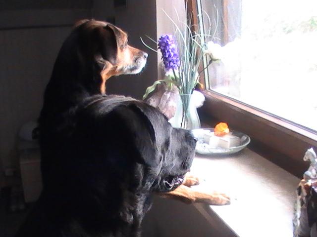 Mein Hund.......! Deiner auch? - Seite 3 Pic_0410