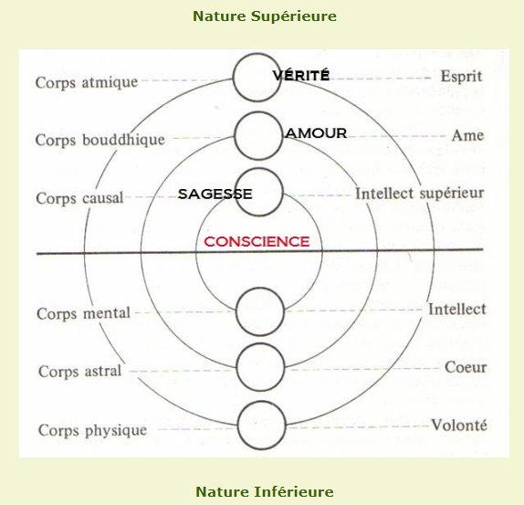 quelle est la relation entre le corps mental et la pensée ? - Page 2 Nature10
