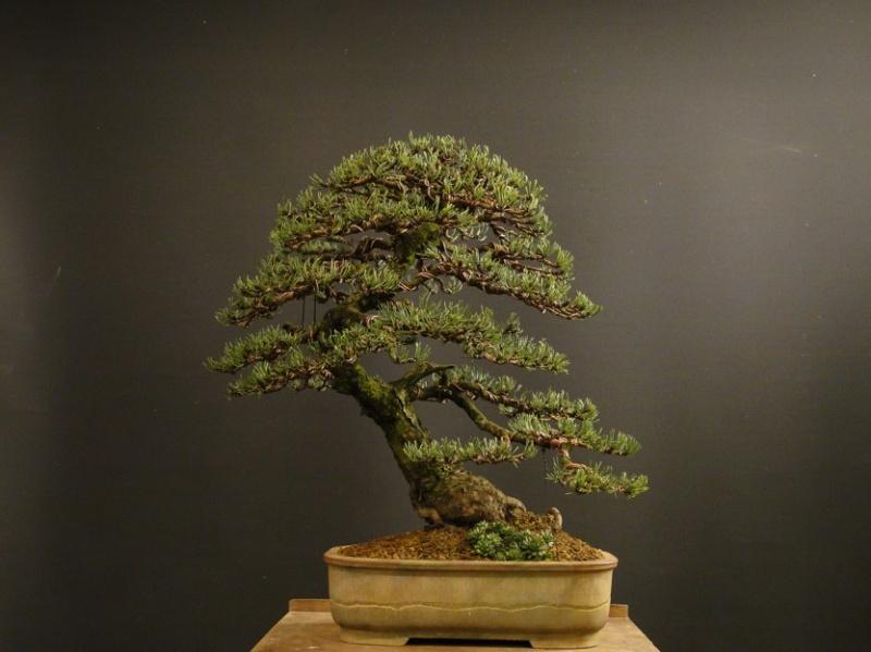 Pinus mugo 2004 - Page 3 Dsc09212