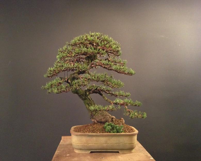 Pinus mugo 2004 - Page 3 Img_4310