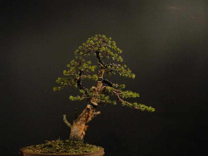 Pine - garden tree - work for client Z11
