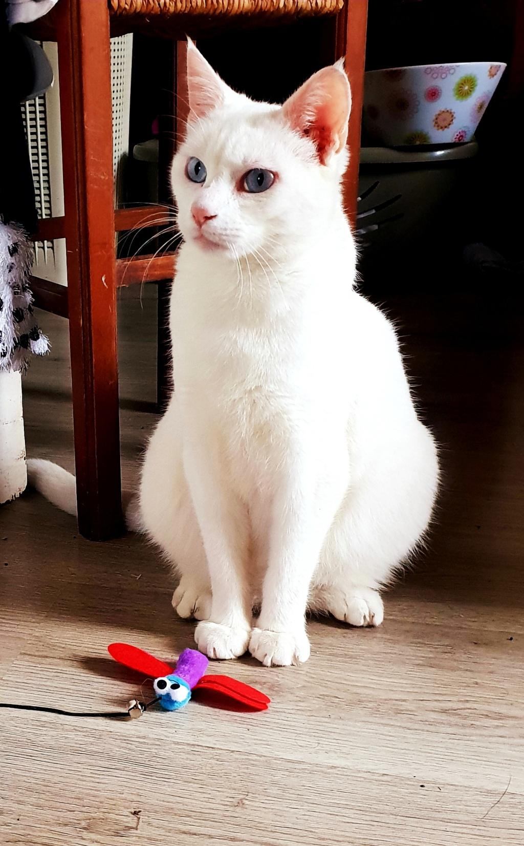 Photos des chats sauvés, avant/après - Page 9 20181110
