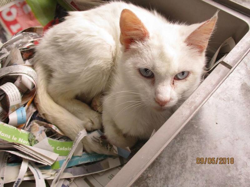 Photos des chats sauvés, avant/après - Page 9 32399210