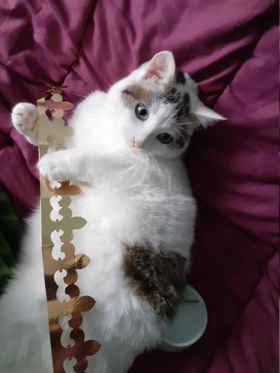 Photos des chats sauvés, avant/après - Page 11 Ciboul11