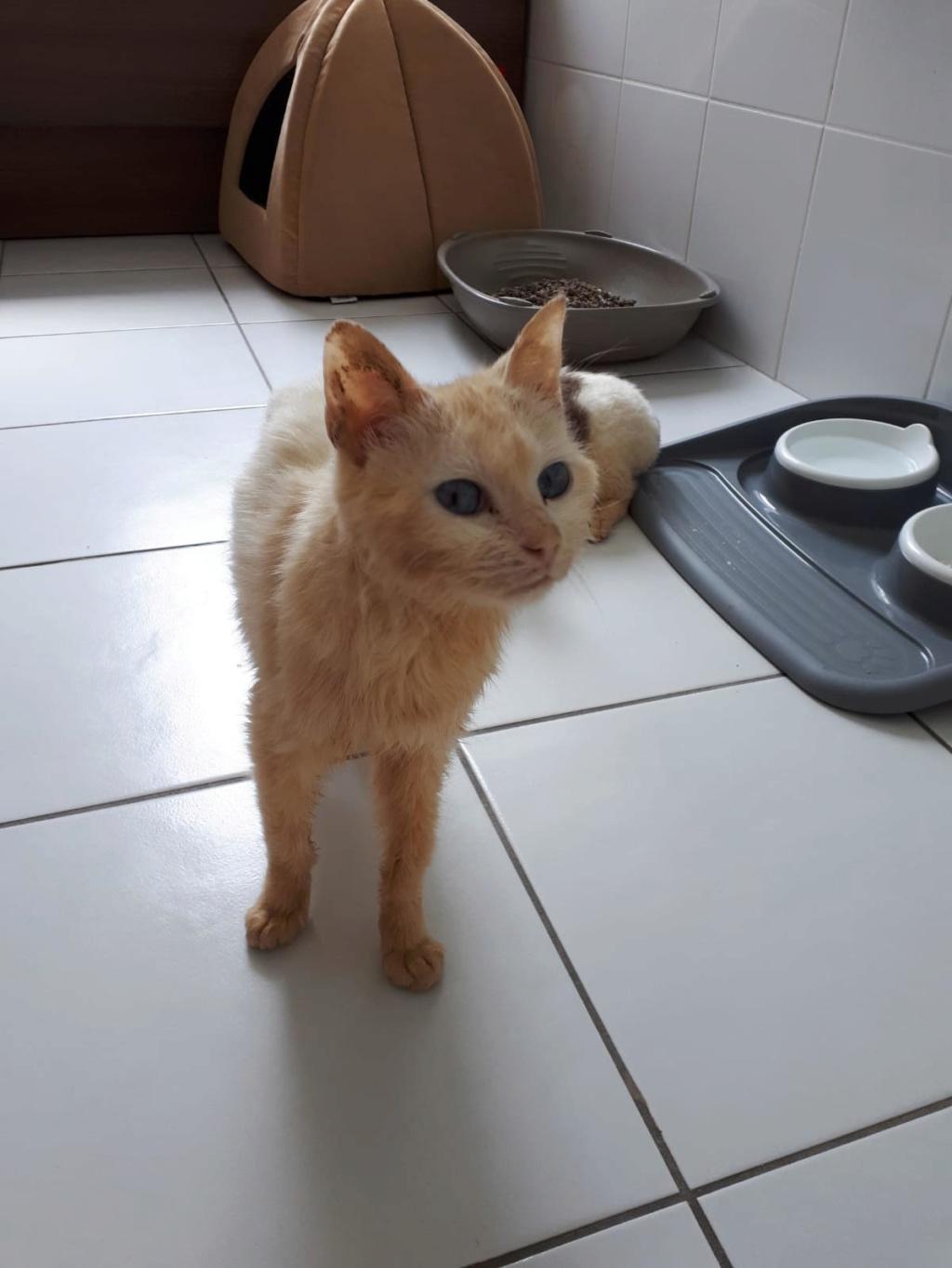 Photos des chats sauvés, avant/après - Page 11 Percy_10