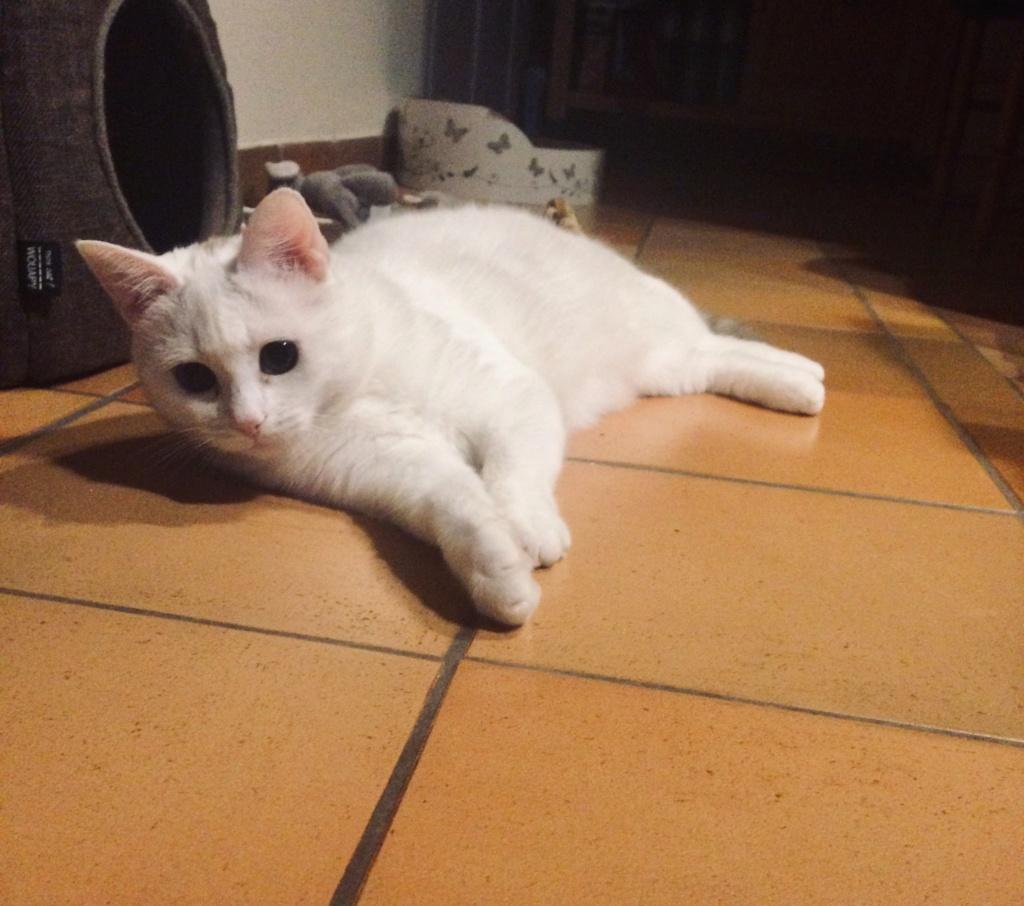 Photos des chats sauvés, avant/après - Page 11 Percy_11