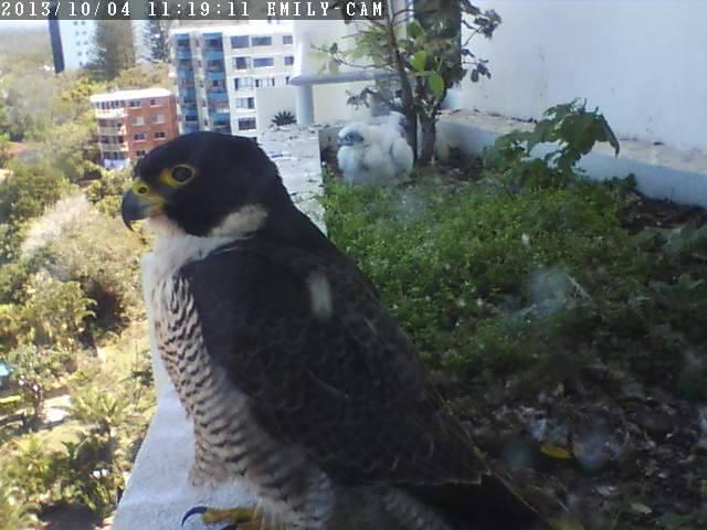 Robyn Hills Falcons 2013 tot en met 2018 - Pagina 2 13774510