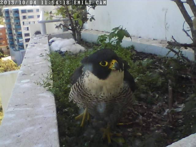 Robyn Hills Falcons 2013 tot en met 2018 - Pagina 2 13829510
