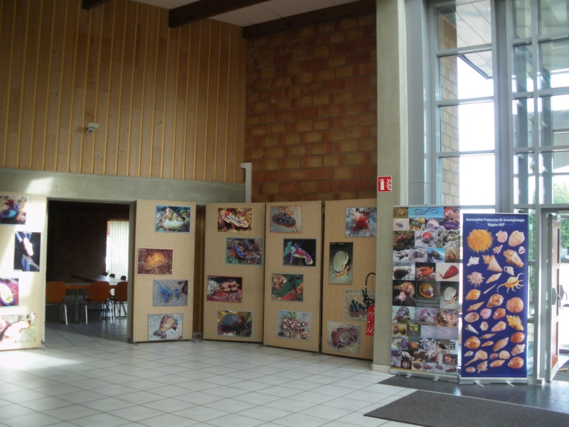 2013 Bourse internationale Ottmarsheim - 14 & 15 Septembre - AFC Région EST  02010