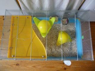 Deux cages (75) P1140512