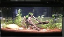 nouveau membre - aquarium 100l Img_2010