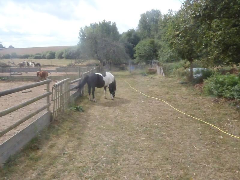 PIRATE - ONC poney né en 2003 - accueilli en refuge en août 2013 Pirate12