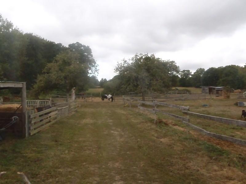 PIRATE - ONC poney né en 2003 - accueilli en refuge en août 2013 Pirate13