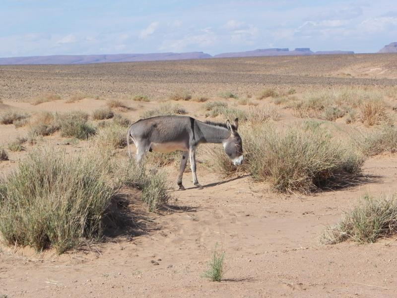 retour maroc 2012 - Page 6 Dscn6516