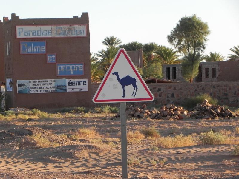 retour maroc 2012 - Page 6 Dscn6517