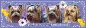 Yorkshire Terrier von der Martinskapelle