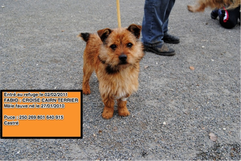 FABIO Croisé Cairn Terrier (rebaptisé Dave) Fabio10