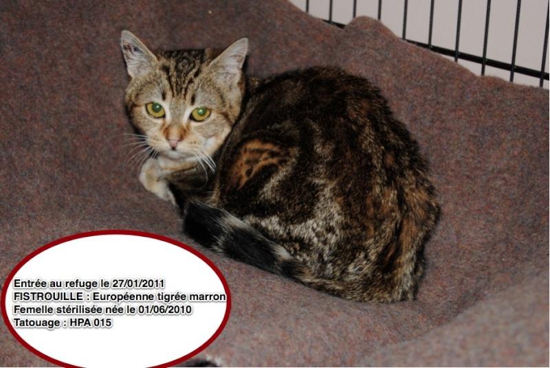 Sauvetage de 2 chats en sud charente Fistro11