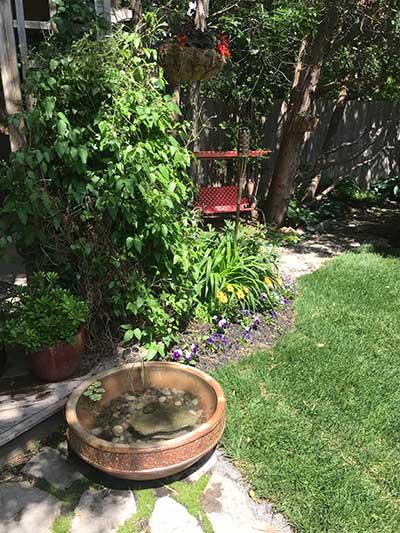 Mini jardin d'eau en contenant Wimg_411