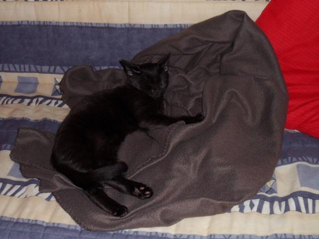 Ilfie, 2 mois, magnifique black smoke  Sam_2010