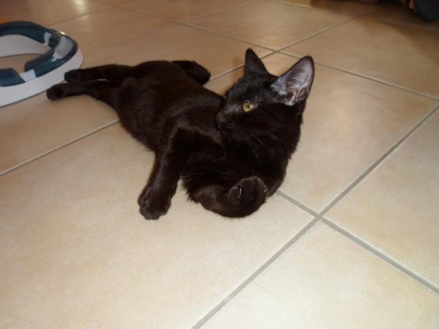 Ilfie, 2 mois, magnifique black smoke  Sam_2012