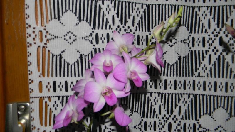 mes dernières orchidées offerte par mon mari Dscn0911