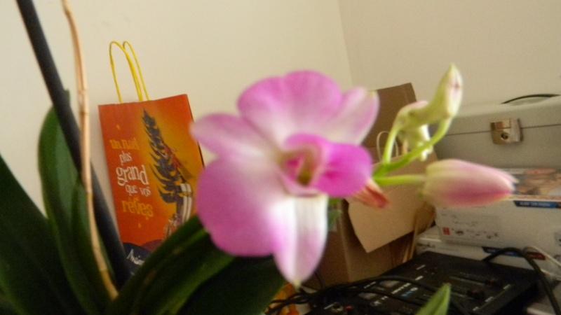 mes dernières orchidées offerte par mon mari Orchid14