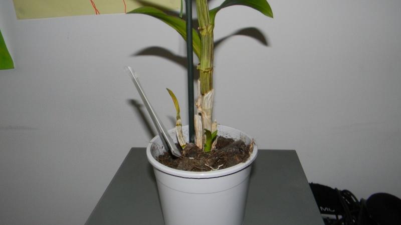 mes dernières orchidées offerte par mon mari Photos13