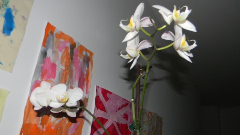 mes dernières orchidées offerte par mon mari Photos14