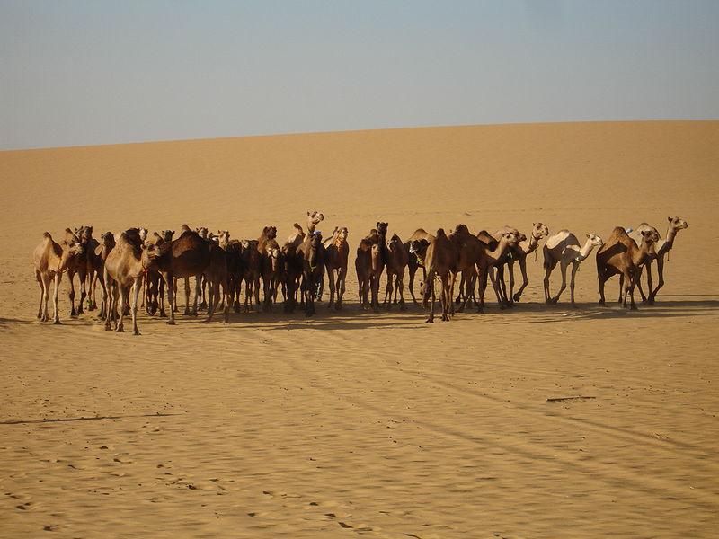 Photos d'Émirats arabes unis 800px-23
