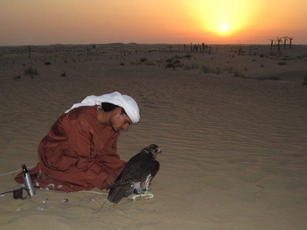 Photos d'Émirats arabes unis Falcon10