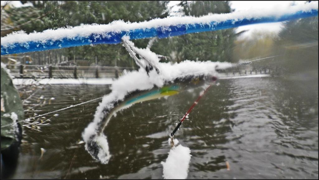 La pêche en eau douce Froidd10