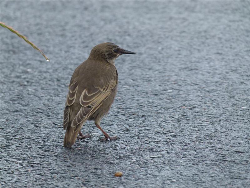Identification oiseau 2_aout13