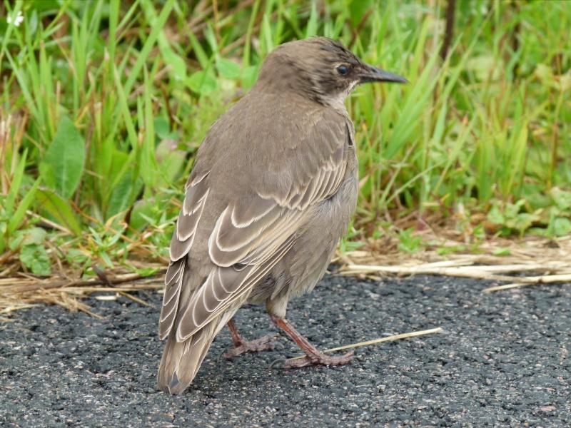 Identification oiseau 2_aout14