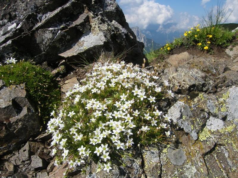 Du 13 au 19 juillet dans le Val di Fassa - Page 2 30_car11