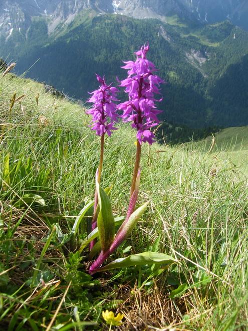 Du 13 au 19 juillet dans le Val di Fassa - Page 2 33_orc11