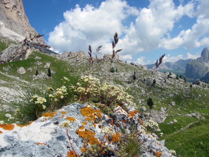 Du 20 au 22 juillet fin de séjour dans les Dolomites 37_sax10