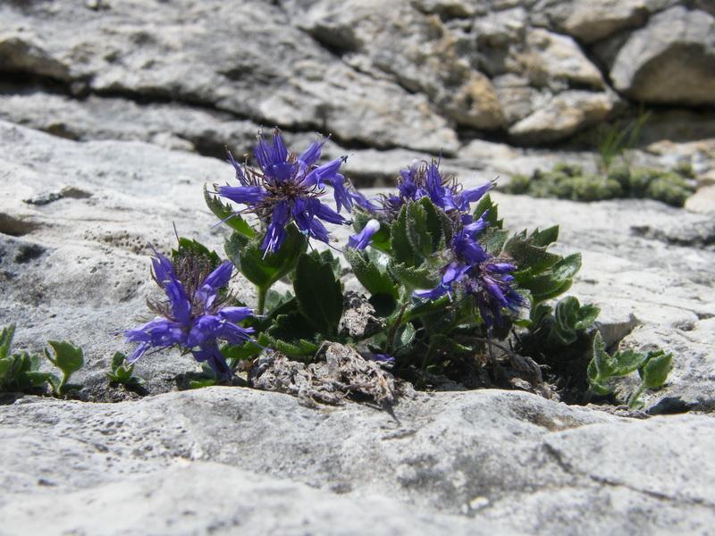 Du 20 au 22 juillet fin de séjour dans les Dolomites 42_pae10