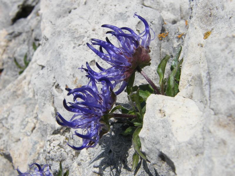 Du 20 au 22 juillet fin de séjour dans les Dolomites 43_phy10