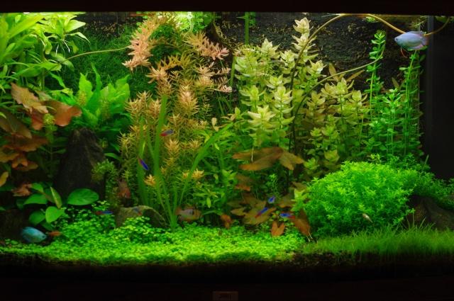 My Planted Vision 180 Imgp8112