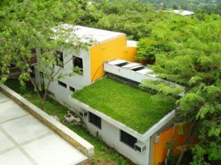 Ecología (Viajar en avión, Feng shui, plantas, arquitectura, techos verdes) 075fcb10