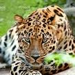 Los animales salvajes abandonan los circos Animal10