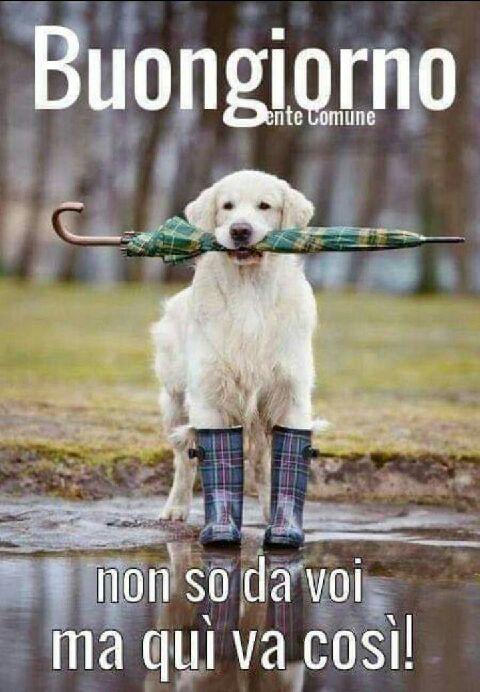 Barzellette divertenti  - Page 4 B9067210