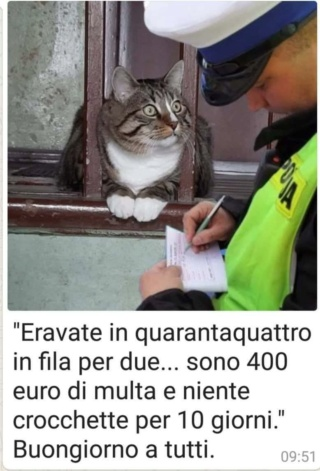 Barzellette divertenti  - Page 5 Ff4a6910