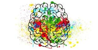 Cerveau, Brain, Cerebro, Cervello Le_cer10