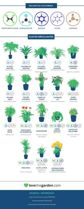 Ecología (Viajar en avión, Feng shui, plantas, arquitectura, techos verdes) Plante11